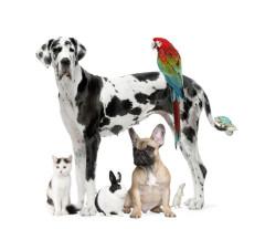 Clinique Vétérinaire nantes La Montagne 44