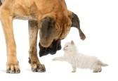 clinique vétérinaire La Montagne nantes 44